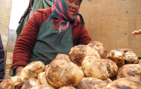 Chinese push for potato popularity